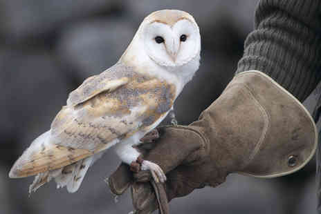 Hawks of Steele - Two hour falconry experience for one  - Save 53%
