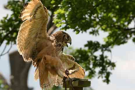 Birds of Prey Centre - 90 Minute Falconry Experience and 90 Minute Animal Encounter for One or Two - Save 79%