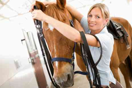 Fox Hills Farm and Riding Centre - Two Hour Stable Management Experience for One or Two - Save 50%