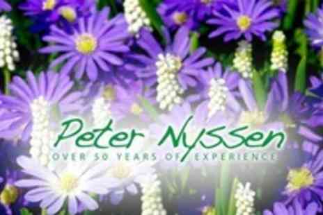 Peter Nyssen - Summer Planting Bulbs Pack of 361 Bulbs - Save 62%