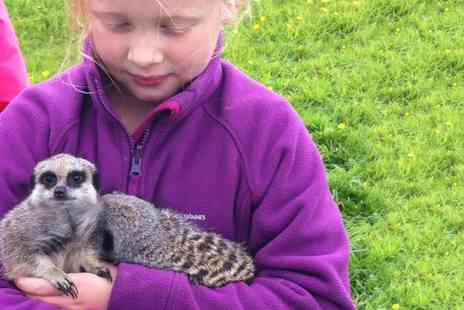 Beaver Hall Equestrian Centre - Hands On Animal Experience with Meerkats and Bearded Dragon Lizards for Up to Four - Save 0%