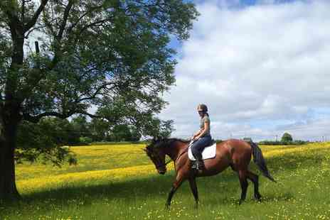 Northaw Riding School - One Hour Horse Riding Lesson - Save 27%
