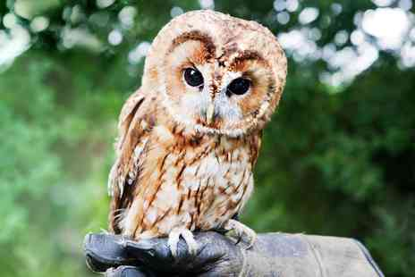 Lightwater Valley Attractions -  60 Minute Owl Handing Experience - Save 53%
