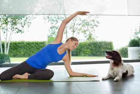 Dogamahny - Three Yoga Classes with Dogs - Save 0%