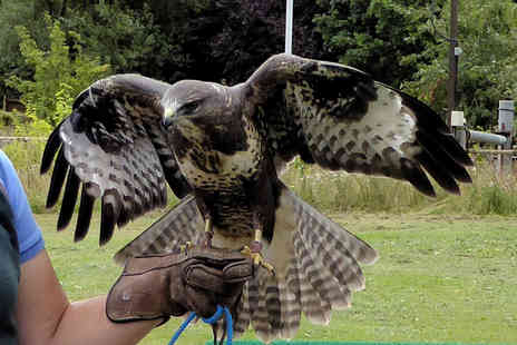 CJ's Birds of Prey - Two hour birds of prey experience for one person - Save 77%