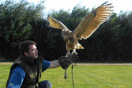 Fixter Falconry - 90 minute falconry experience for one person - Save 72%