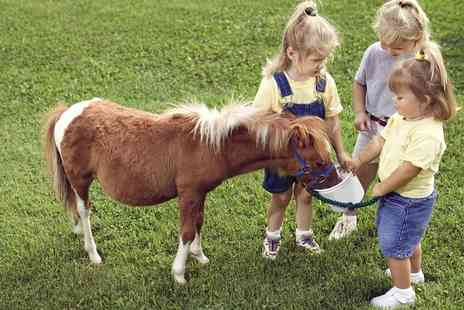 Middleton Riding Centre - Pony Party for Five or 10 Children - Save 65%