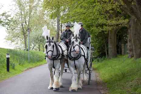 Kent Carriage Horses - Carriage Ride for Two with White Horse Farm Carriages - Save 50%