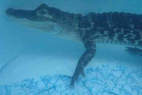 Crocs R Us - Swimming with Croc Plus Crocodile and Venomous Snake Tour with Photo for One or Two - Save 55%