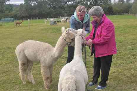 Charnwood Forest Alpacas - Choice of Alpaca Adoption Package - Save 55%