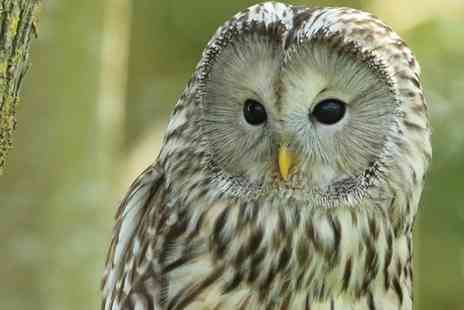 Shropshire Falconry - 90 Minute Owl Experience for One or Two - Save 71%