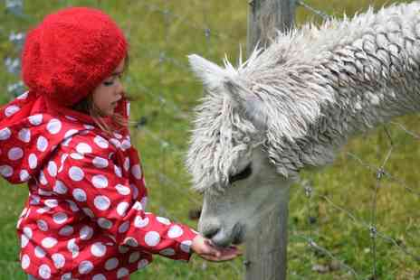 Charnwood Forest Alpacas - Walk with Alpacas Experience or a 12 Month Alpaca Adoption - Save 49%