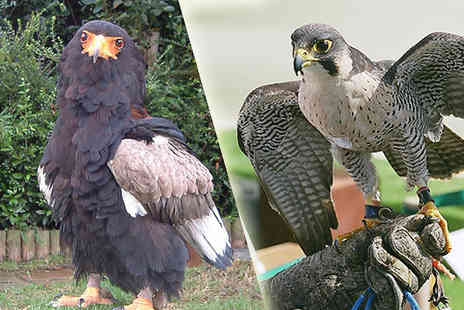 Xtreme Falconry - 2 Hour Birds of Prey Experience For One or Two - Save 0%