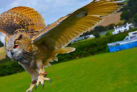 CJ Birds of Prey - Two Hour Owl Experience for One or Two - Save 77%