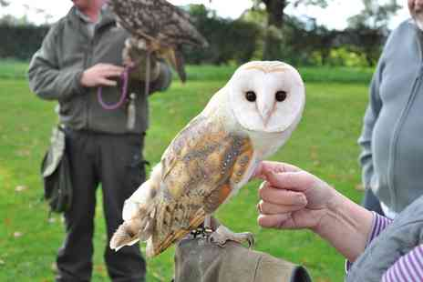 Battlefield Falconry Centre - Birds of Prey Meet and Handle the Owls Experience and Talk for One or Two - Save 76%