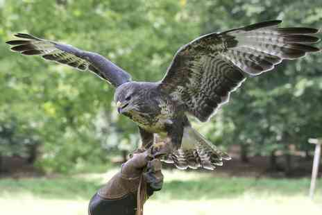 Hawkforce Birds of Prey - Two hour falconry experience for one - Save 65%
