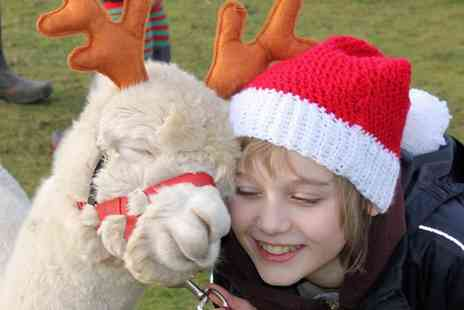 Charnwood Forest Alpacas - Christmas Trail Alpaca Walk for One Child and One Adult or a Family - Save 35%