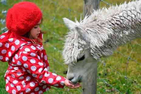 Charnwood Forest Alpacas - £35 or £70 to Spend on Courses, Walks and Adoptions - Save 50%