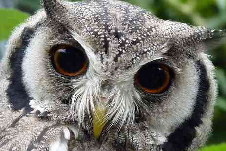 Kirkleatham Owl Centre - Twilight Owl Experience for Two or Four - Save 51%