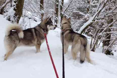 Horse and Husky - Husky Hiking Experience with Adoption Certificate for One or Two - Save 72%