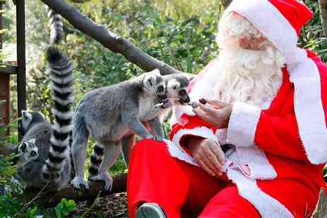 Bristol Zoo - Enchanted Christmas on 16 To 18 December - Save 50%
