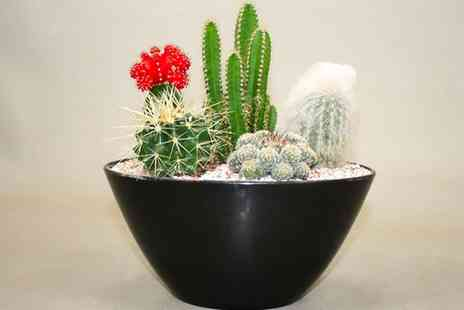 Gardening Express - Contemporary Cactus Garden Arrangement With Free Delivery - Save 0%