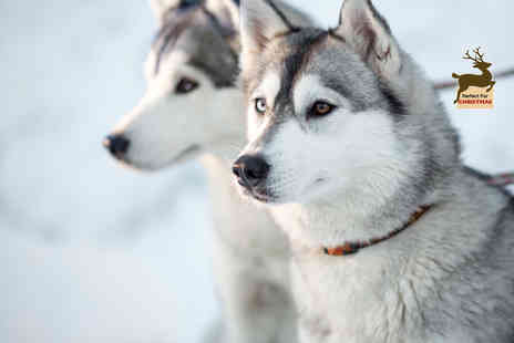 Horse and Husky - One year husky adoption pack or including the chance to meet your sponsored husky - Save 53%