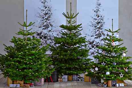 Gardening Express - Fresh Cut Non Drop Nordman Fir Christmas Tree with Stand Include Free Delivery - Save 64%