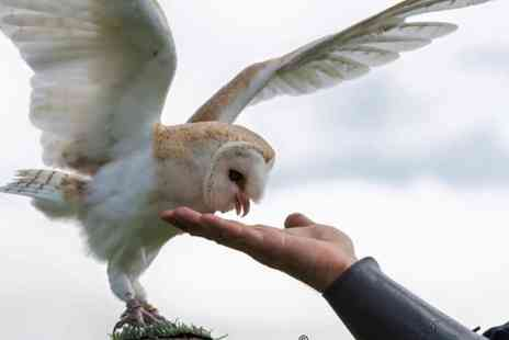 Hawking About - 60 Minute Owl Encounter Experience for One or Two - Save 60%