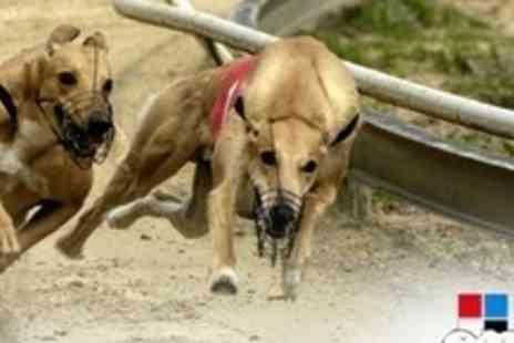 Drumbo Park - Greyhound Racing Entry With Race Programme, Burger and Drink For Two - Save 70%