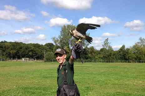 Hawkforce Birds of Prey - Two hour falconry experience for one or two - Save 65%