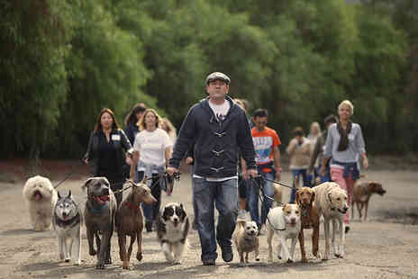 The UK Dog Whisperer - Dog behaviour and psychology weekend course - Save 51%