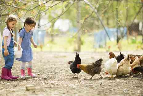Highfields Happy Hens - Farm Day with Two Lunchboxes, Animal Feed and Crazy Golf for Four - Save 67%