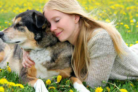 Holly and Hugo - Special Care for Special Pets Course - Save 92%