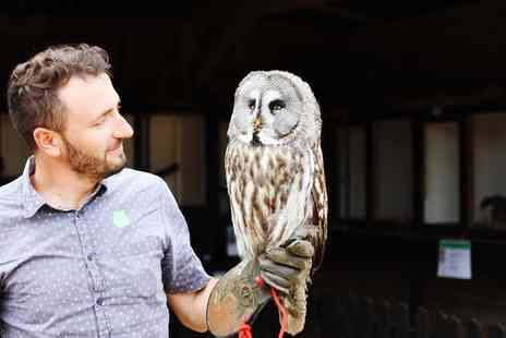 Fixter Falconry - Owl Handling Experience - Save 60%