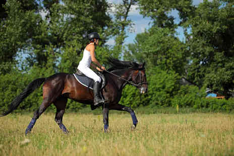 The Cabin Equestrian Centre - One hour horse riding lesson - Save 52%