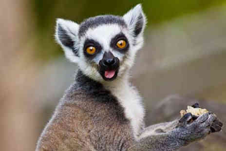 Activity Superstore - Two tickets to a Meet the Lemurs experience - Save 43%