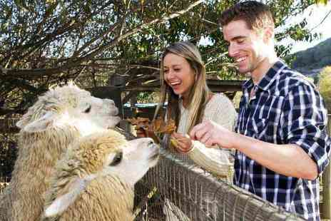 The Llama Park - Entry to The Llama Park for one adult and one child or two adults and two children - Save 54%