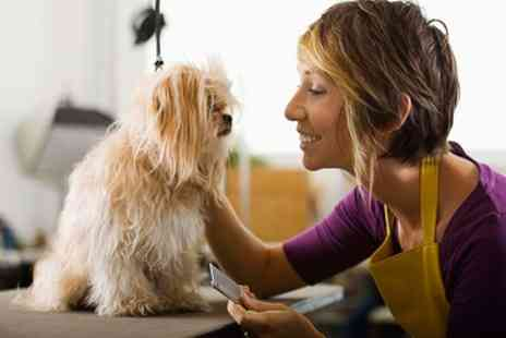 Pet Addict - Online Dog and Cat Grooming Course - Save 0%