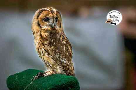 CJ's Birds of Prey - Two hour birds of prey experience or owl encounter for one or Two - Save 80%