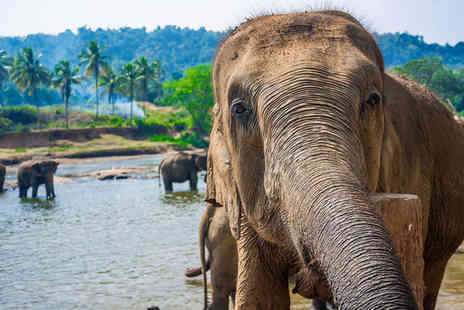 Sri Lanka Wildlife Tour - Four Star Remarkable Nature and Scenery For Two - Save 0%