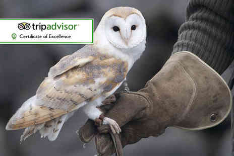 Hawks of Steele - Hour long owl experience or two hour falconry experience - Save 60%
