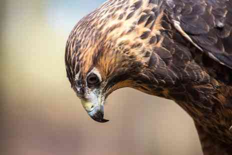 Riverside Falconry - Birds of Prey Experience for One or a Guided Hawk Walk for Up to Four - Save 0%