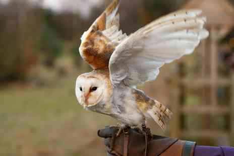Battlefield Falconry Centre - Birds of Prey Experience for One Child or One or Two Adults - Save 0%