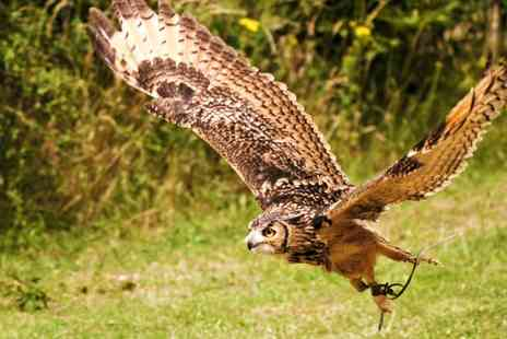 CJ's Birds Of Prey - Two Hour Birds of Prey or Owl Encounter Experience for One or Two - Save 77%