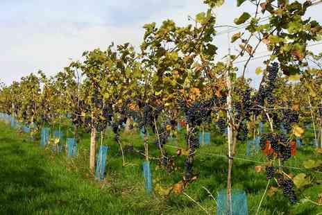 Sedlescombe Organic Vineyard - Autumn Winery Tour with Lunch and Wine Tasting for Two - Save 41%