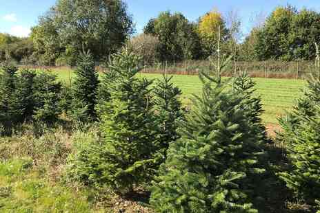 Newbury Christmas Tree Farm - Pick a Christmas Tree Experience with a Fraser Fir Tree and Optional Reef - Save 0%