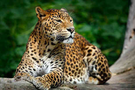 Private Sri Lanka Wildlife Tour - Four Star Remarkable Nature and Scenery - Save 0%