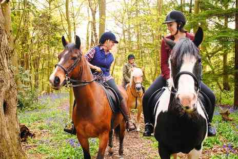 Four Winds Equestrian Centre - One Hour Horse Riding Lesson for Child or Adult - Save 33%