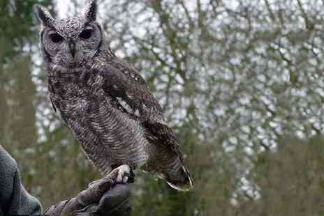 Hawksflight Falconry - Two or three hour owl handling and flying experience - Save 54%